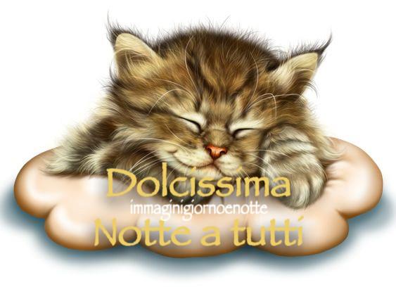 dolce notte immagini gatti